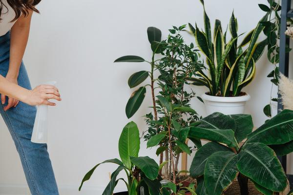 Najlepšie izbové rastliny, ktoré