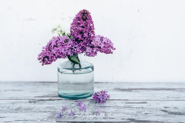 Vyniká krásou a vôňou,